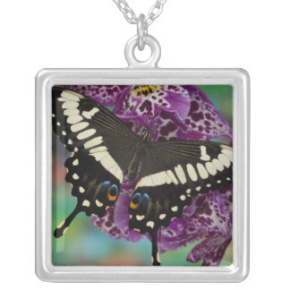 Sammamish, Washington Tropical Butterfly 13 Silver Plated Necklace