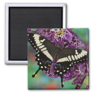 Sammamish, Washington Tropical Butterfly 13 Square Magnet