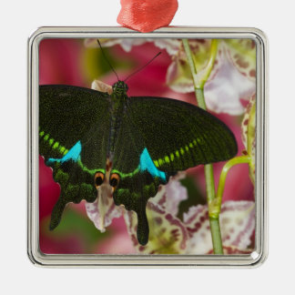 Sammamish, Washington Tropical Butterfly 14 Christmas Ornament