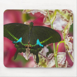 Sammamish, Washington Tropical Butterfly 14 Mouse Mat