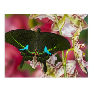 Sammamish, Washington Tropical Butterfly 14 Postcard