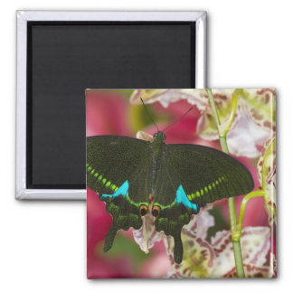 Sammamish, Washington Tropical Butterfly 14 Square Magnet