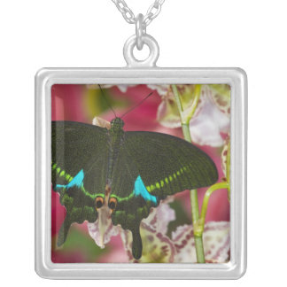 Sammamish, Washington Tropical Butterfly 14 Square Pendant Necklace