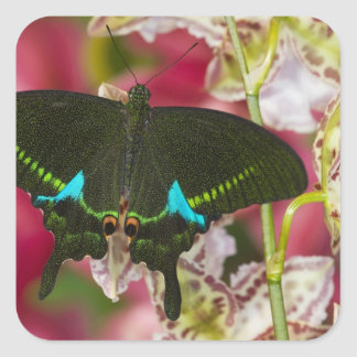 Sammamish, Washington Tropical Butterfly 14 Square Sticker