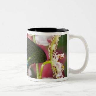 Sammamish, Washington Tropical Butterfly 14 Two-Tone Coffee Mug