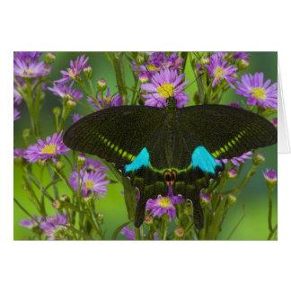 Sammamish, Washington Tropical Butterfly 15 Card