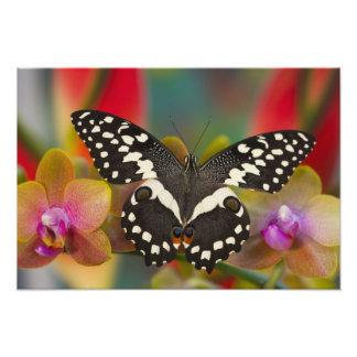 Sammamish, Washington Tropical Butterfly 15 Photo Print