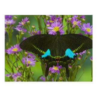 Sammamish, Washington Tropical Butterfly 15 Postcard