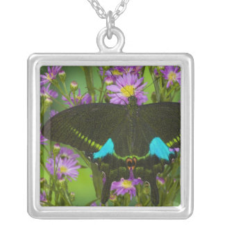 Sammamish, Washington Tropical Butterfly 15 Square Pendant Necklace