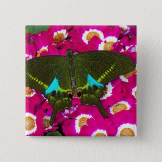 Sammamish, Washington Tropical Butterfly 16 15 Cm Square Badge