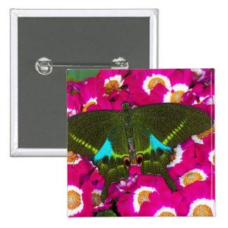 Sammamish, Washington Tropical Butterfly 16 15 Cm Square Badge