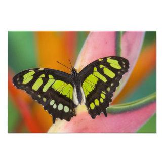 Sammamish, Washington Tropical Butterfly 16 Photo Print