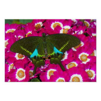 Sammamish, Washington Tropical Butterfly 16 Poster