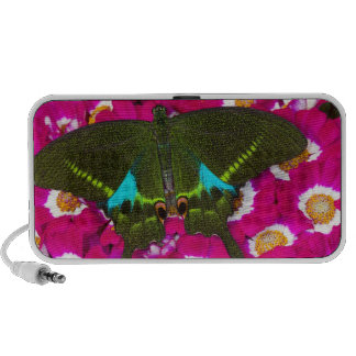 Sammamish, Washington Tropical Butterfly 16 PC Speakers