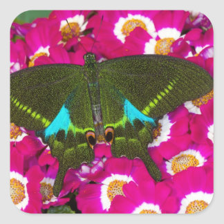 Sammamish, Washington Tropical Butterfly 16 Square Sticker
