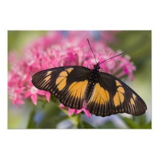 Sammamish, Washington Tropical Butterfly 17 Photo Print