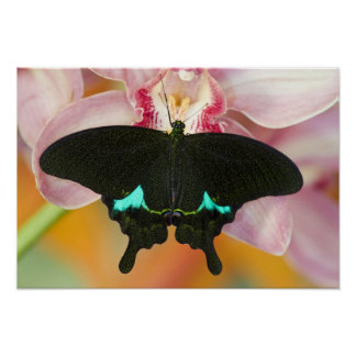 Sammamish, Washington Tropical Butterfly 17 Poster