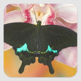 Sammamish, Washington Tropical Butterfly 17 Stickers