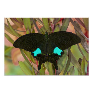 Sammamish, Washington Tropical Butterfly 18 Poster