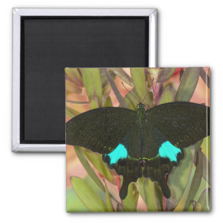 Sammamish, Washington Tropical Butterfly 18 Square Magnet