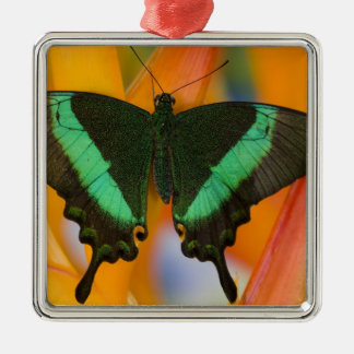 Sammamish, Washington Tropical Butterfly 19 Christmas Ornament