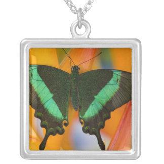Sammamish, Washington Tropical Butterfly 19 Custom Necklace