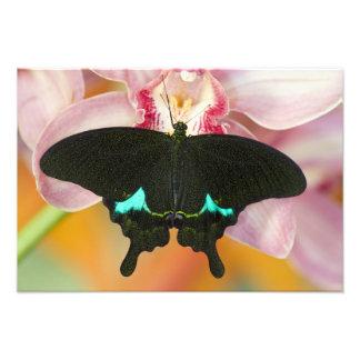 Sammamish, Washington Tropical Butterfly 19 Photo Print