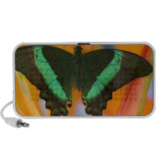 Sammamish, Washington Tropical Butterfly 19 Portable Speakers