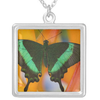 Sammamish, Washington Tropical Butterfly 19 Square Pendant Necklace