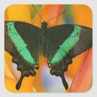 Sammamish, Washington Tropical Butterfly 19 Square Sticker