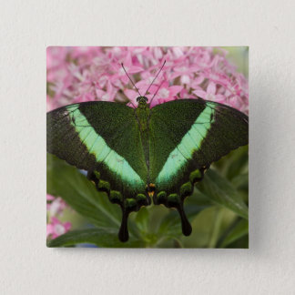 Sammamish, Washington Tropical Butterfly 20 15 Cm Square Badge