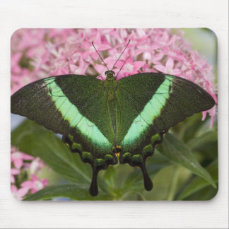 Sammamish, Washington Tropical Butterfly 20 Mouse Mat