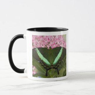 Sammamish, Washington Tropical Butterfly 20 Mug