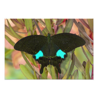 Sammamish, Washington Tropical Butterfly 20 Photo Print