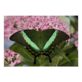 Sammamish, Washington Tropical Butterfly 20 Poster
