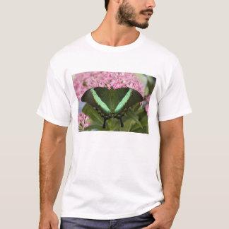 Sammamish, Washington Tropical Butterfly 20 T-Shirt