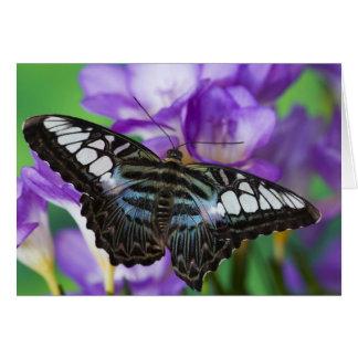 Sammamish, Washington Tropical Butterfly 21 Card