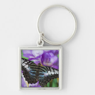 Sammamish, Washington Tropical Butterfly 21 Key Ring