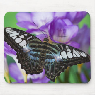 Sammamish, Washington Tropical Butterfly 21 Mouse Mat