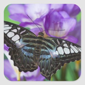 Sammamish, Washington Tropical Butterfly 21 Square Sticker