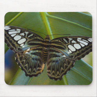 Sammamish, Washington Tropical Butterfly 22 Mouse Mat