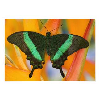 Sammamish, Washington Tropical Butterfly 22 Photo Print