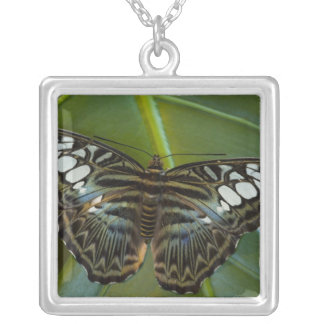 Sammamish, Washington Tropical Butterfly 22 Silver Plated Necklace