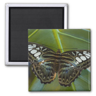 Sammamish, Washington Tropical Butterfly 22 Square Magnet