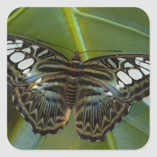 Sammamish, Washington Tropical Butterfly 22 Square Stickers