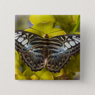 Sammamish, Washington Tropical Butterfly 23 15 Cm Square Badge