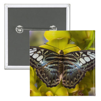 Sammamish, Washington Tropical Butterfly 23 Pin