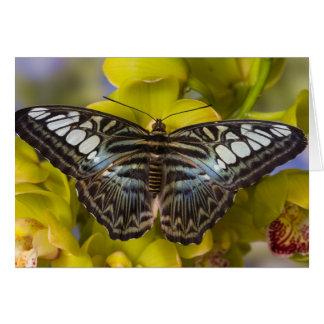 Sammamish, Washington Tropical Butterfly 23 Card