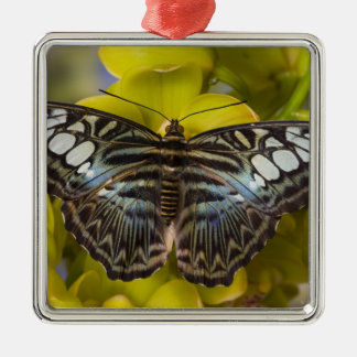 Sammamish, Washington Tropical Butterfly 23 Christmas Ornament