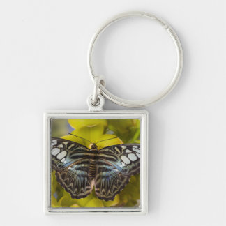 Sammamish, Washington Tropical Butterfly 23 Key Ring